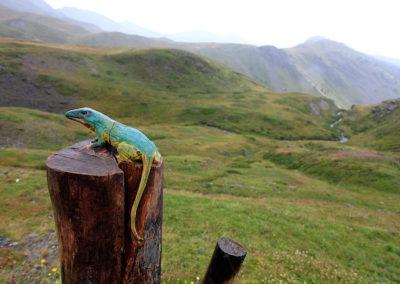 Verso il Rifugio Mont Fallere, Valle d'Aosta, Italia, Europa