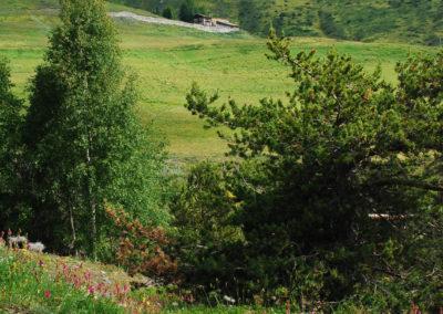 Rifugio-mont-fallere-DSC_0117